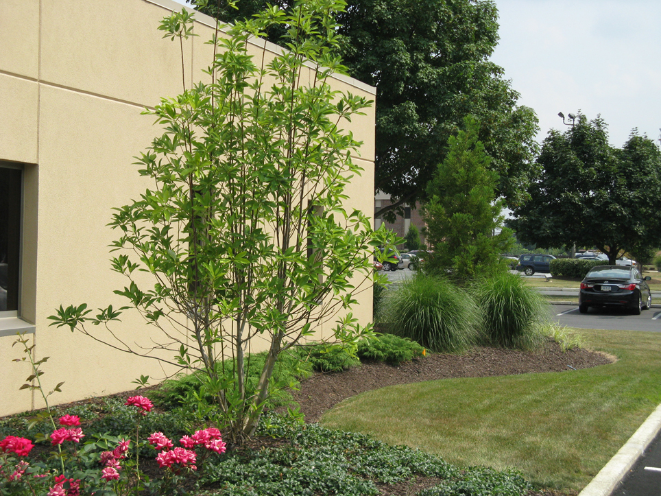 Commercial landscape design millcreek lehigh valley pa for Commercial landscape design