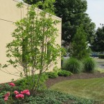 fresh landscaping by commercial building