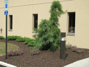 tree with landscaping surrounding it