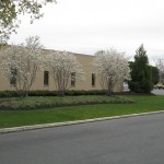 white trees by commercial building